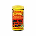 Tropical  Gammarus 1 L.